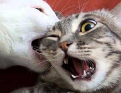С кем будет жить ваш кот после развода